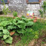 w.Wilton vegetable plot