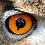 w.owl eye