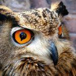 w.Owl